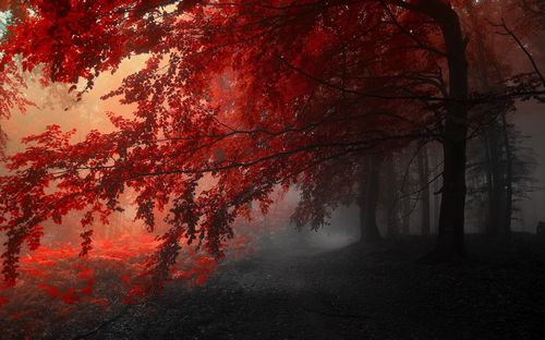 Fantastic colored trees for images