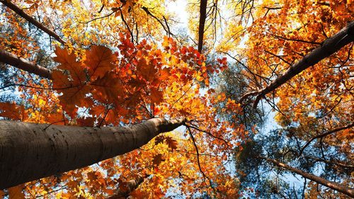 Cool colored trees images