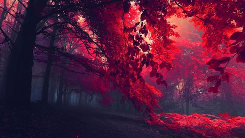 Best colored trees photos
