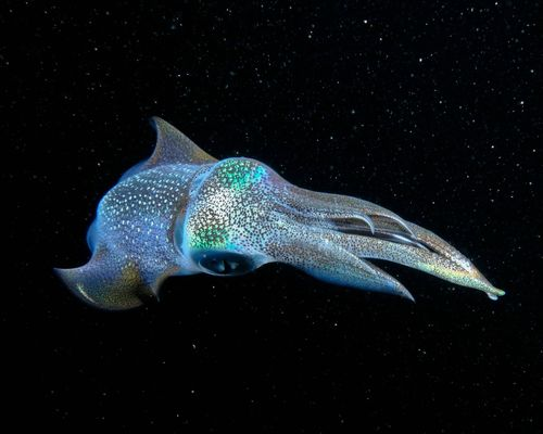 Best Collection of Sea Animal