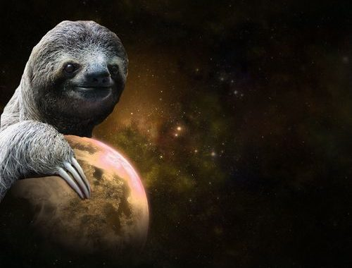 Top 48 Sloth Wallpapers