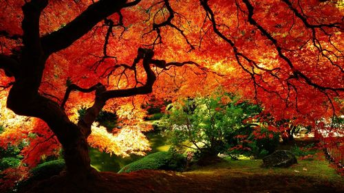 Amazing colored trees pics
