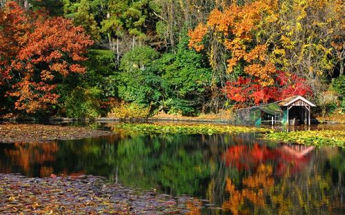 Wonderful colored tree photos and images