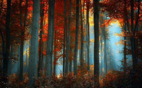 Beauteous colored trees pictures