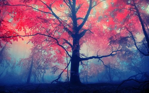 Brilliant photos of colored trees
