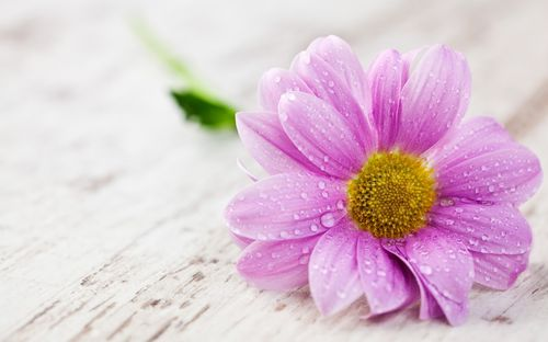 Top 51 pink flower wallpapers fashionwtf pink color floral wallappers hd mightylinksfo